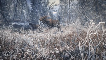 Screenshot5 - theHunter: Call of the Wild - Medved - Taiga