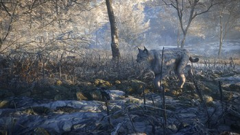 Screenshot6 - theHunter: Call of the Wild - Medved - Taiga