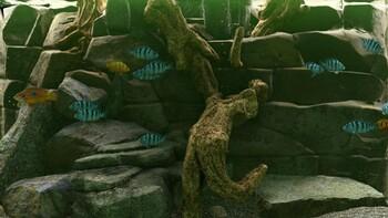 Screenshot5 - Biotope